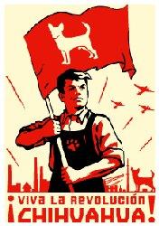 Compañeros y compañeras revolucionarios